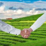 מכירת השדה